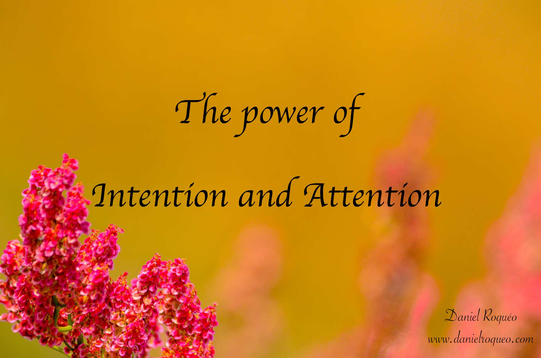 the power of intention and attention